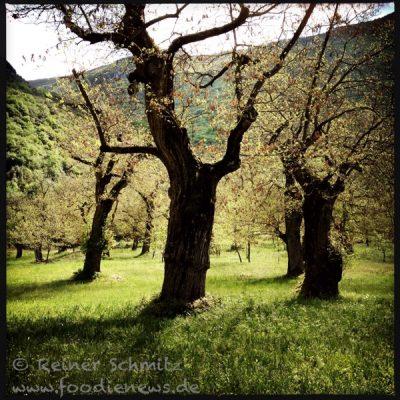 Baeume_Gardasee_20140510-111913